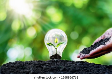 Tree grows in light bulbs, energy-saving and environmental concepts on Earth Day. - Shutterstock ID 1568966761
