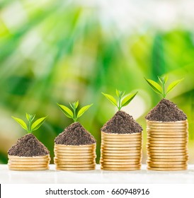 Tree growth in golden coins with fresh nature background, business concept.