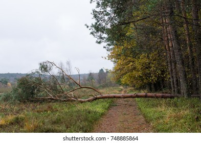 tree had a really bad day...