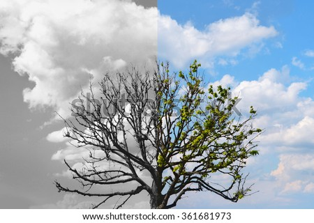 Tree Half Alive Leaves Another Half Stock Photo Edit Now 361681973