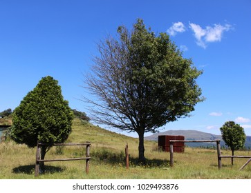 Tree with half full of leaves and other half bare, set amongst green rolling hills