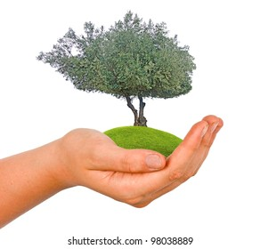 Tree in hand