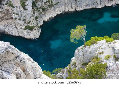 Tree hanging onto cliff at Calanque d'en Vau, between Marseille and Cassis, Provence, France