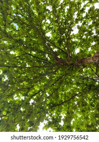 The tree has  branches and many tiny leaves looking up like natural background.