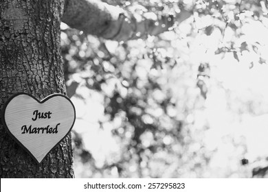 A tree has a just married sign on it, in black and white.