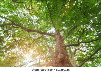 tree hdr  tree on a sunny day photo