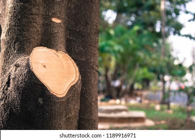 tree heart cut