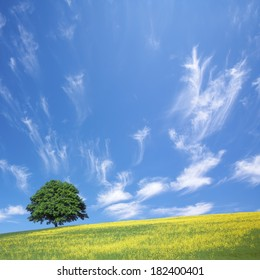 Tree and hill with mustard flowers