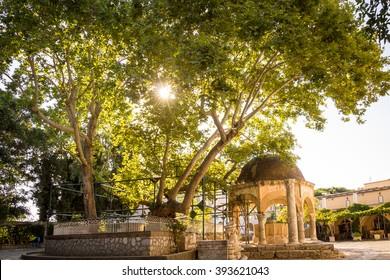 The tree of Hippocrates