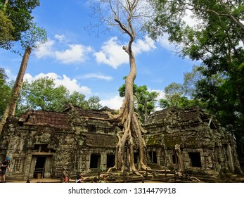 tree and his roots growing on Ta Prohm temple, part of abandoned old ruins in Angkor temple city (khmer civilization), Siem Reap, Cambodia, Southeast Asia (also location for film Tomb Raider)
