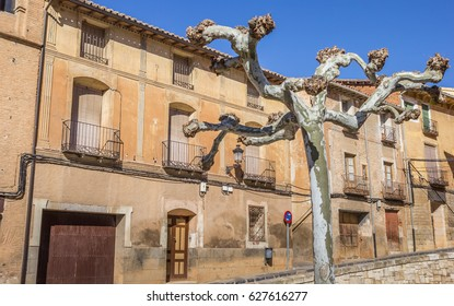 Tree and historical houses in the center of Daroca, Spain