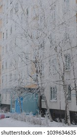 A tree in a hoarfrost near a multi-storey building in the city.