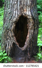 Tree hollow