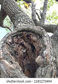 Tree hollow, hollow tree, tree hole, hollow