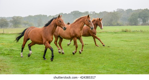 tree horses on a green meadow in morning fog