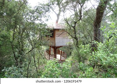 tree house, wood home in the forest up in the trunk of a pine tree