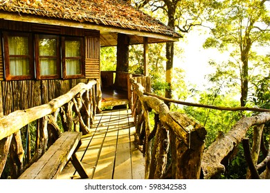 The Tree House with wooden bridge and tree
