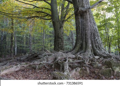 Tree with huge roots at forest