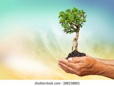Tree, Human Hand, Growth.