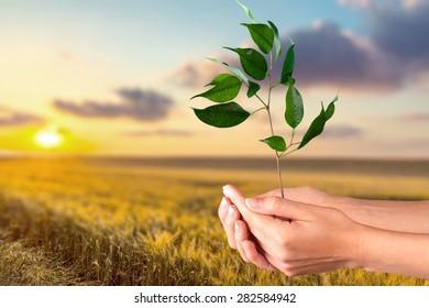 Tree, Human Hand, Plant.