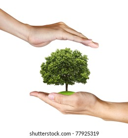 a Tree in human hands on white background