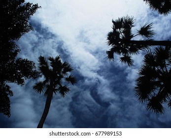 Tree image with a night sky background