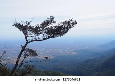 Tree of initiation