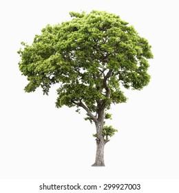 Tree of isolate