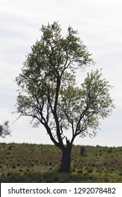 Tree isolated in the field