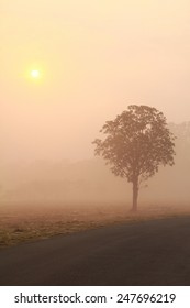 tree isolated in the morning fog and warm sunlight