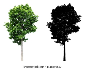 Tree isolated on white background, Tree silhouettes