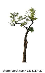 tree isolated on white background with clipping path