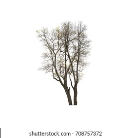 Tree isolated on white the background include clipping path.