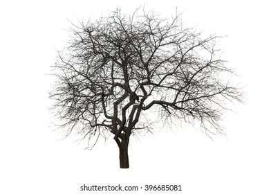 tree isolated over white background
