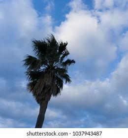 Tree in Jeju island