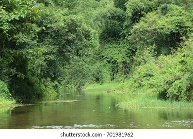 tree in the jungle with river