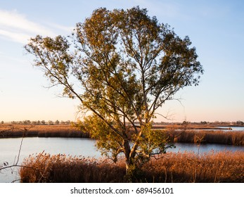 Tree with lake background - Sunrise in the ditch Burlamacca