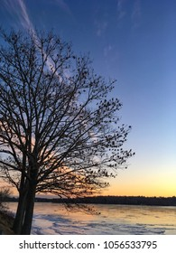 Tree and lake at sunset