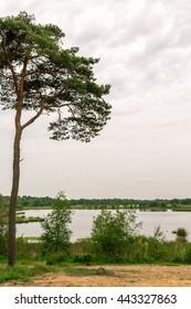 Tree and lake swamp in Kampina, Netherlands