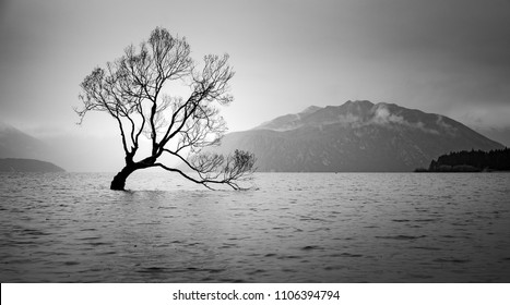 The Tree in Lake Wanaka, south Island, New Zealand landscape, B&W color