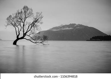 The Tree in Lake Wanaka, south Island, New Zealand landscape, B&W color