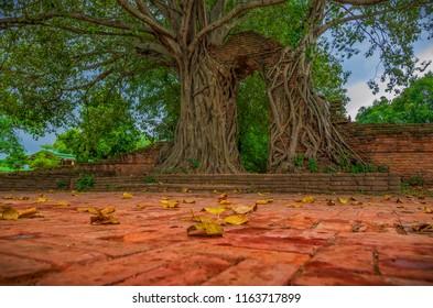 Tree of Last door