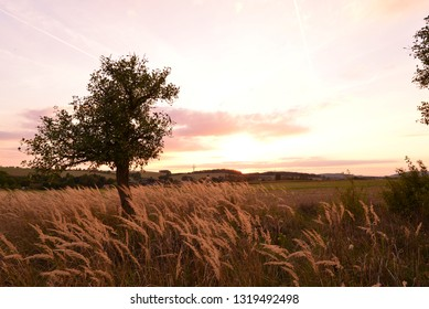 Tree in late summer sunset light with grass.