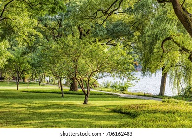 Tree and Lawn