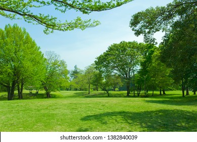 tree and lawn in the garden