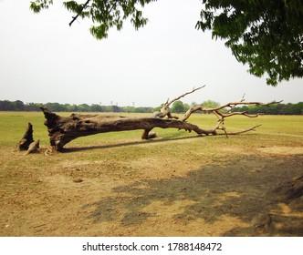 Der Baum lag tot im Grasfeld.