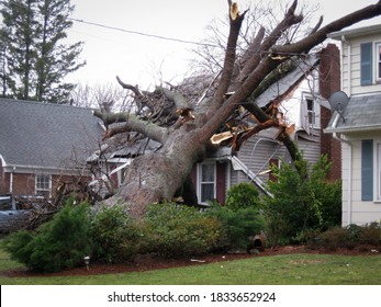 A tree lays on top of a house that has been damaged by a hurricane.