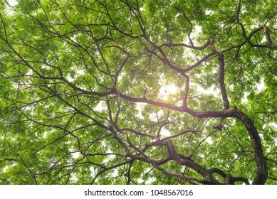 tree and leaf background texture