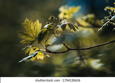 A tree leaf in a dreamy background with a blue spot