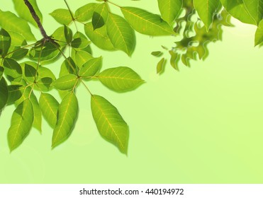 Tree Leaf And Flare background
